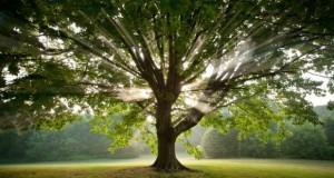 Mindfulness albero con riflesso del sole